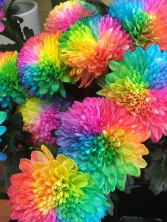Rainbow Disbuds