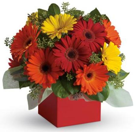 PA34 Glorious Gerberas