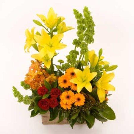 PA24 Floral Splendour